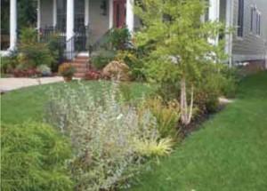 Rain Garden — Edgewater