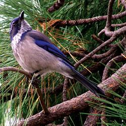 Birdscaping_3