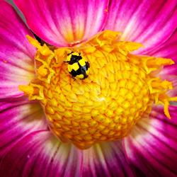 ladybug_article3
