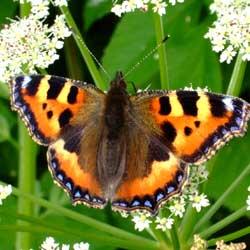 backyard-butterfly-1