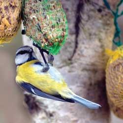 feeding-birds-winter-3