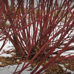 pruning-fundamentals-2
